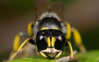 Find Out How to Get Rid of Ground Digger Wasps Around Your Home