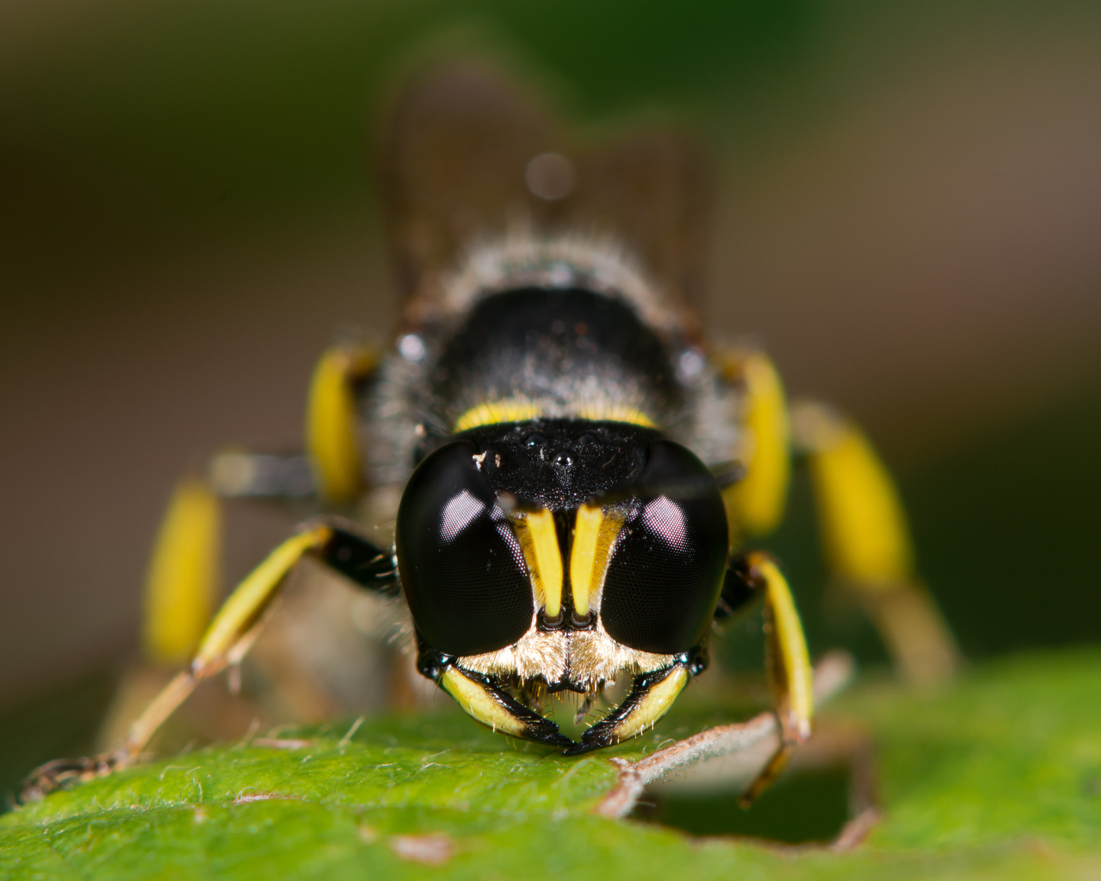 Find Out How To Get Rid Of Ground Digger Wasps Around Your