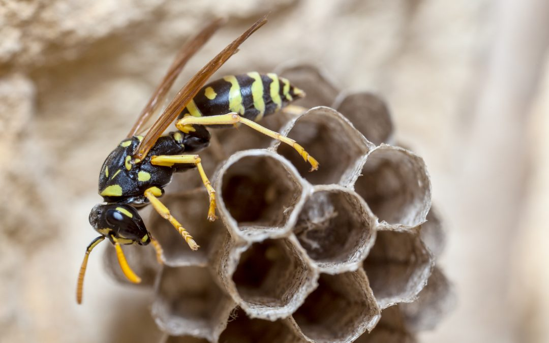 What is The Difference Between a Bee and a Wasp? Learn This and More