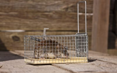 The Most Common Types of Wildlife Removal Services for Homeowners