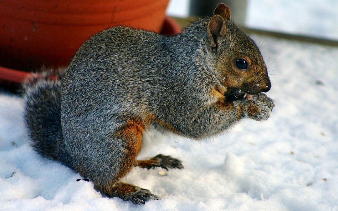 Wildlife Control in Winter