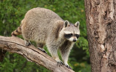 Learn About and Prevent Wildlife Problems in Spring